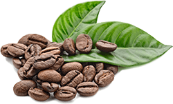 coffee and leaves